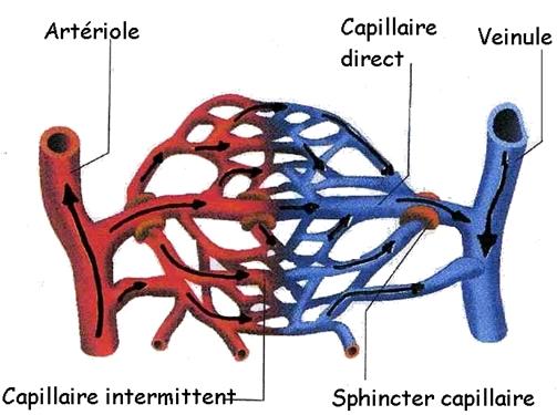 doc3_capillaire