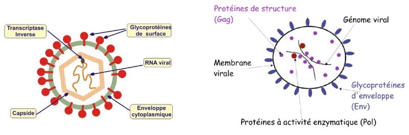 schema_retrovirus