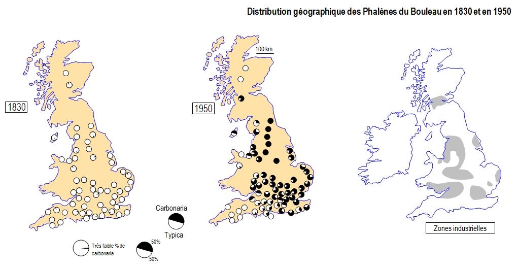distrib_phalenes